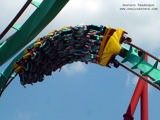 Kumba photo from Busch Gardens Tampa