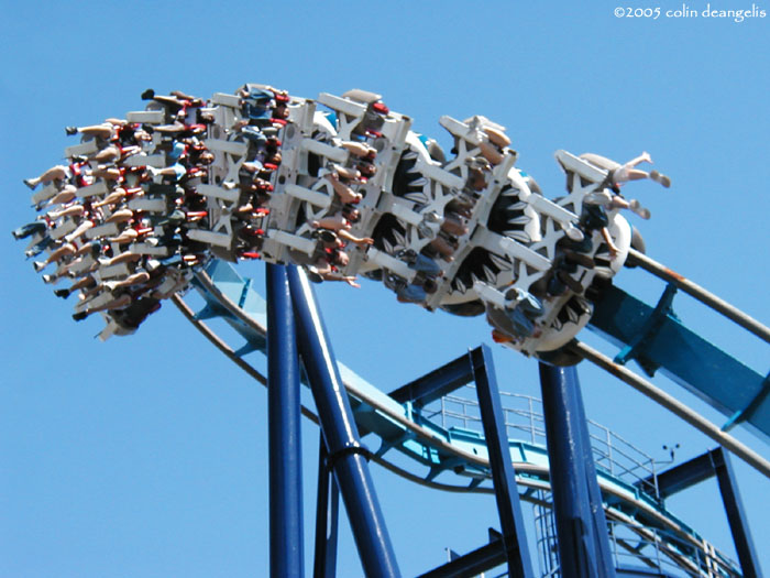 Great White photo from SeaWorld San Antonio