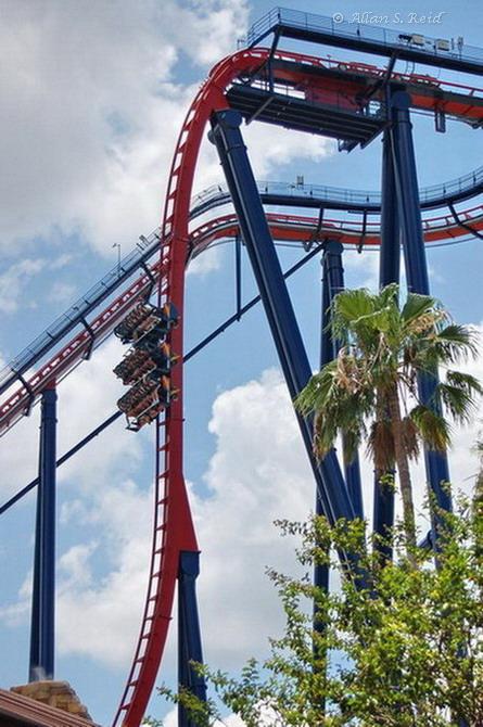 Sheikra Photo From Busch Gardens Tampa Coasterbuzz