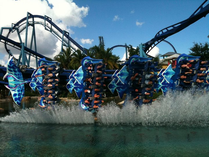 Manta photo from SeaWorld Orlando